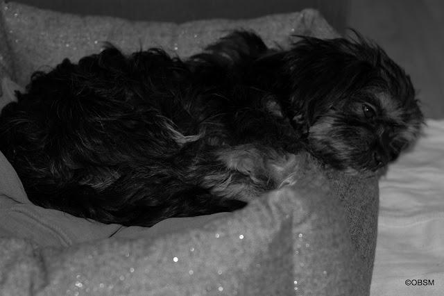 hund-eingewoehnen_strassenhund_blog_oceanblue-style.jpg